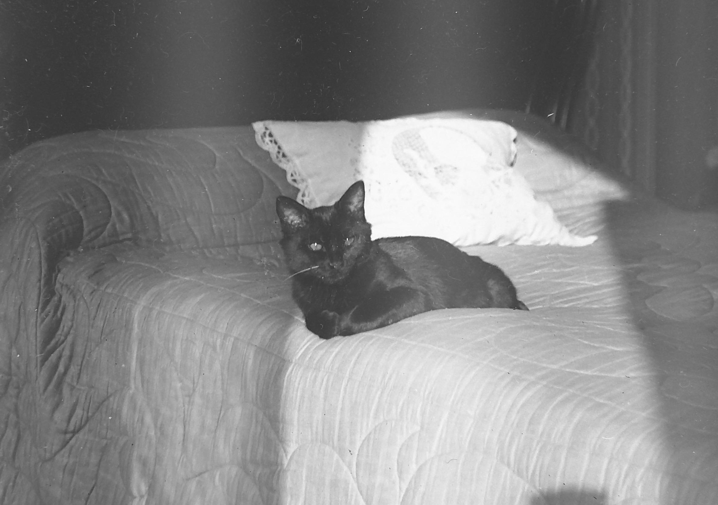 Toto sur le lit  (photographie prise par Germaine)